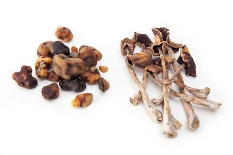 paddo's paddestoelen magic mushrooms truffels trippen tripmiddelen tripmiddel